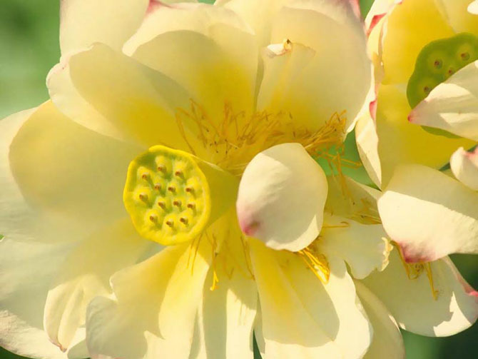 flowers1_2011