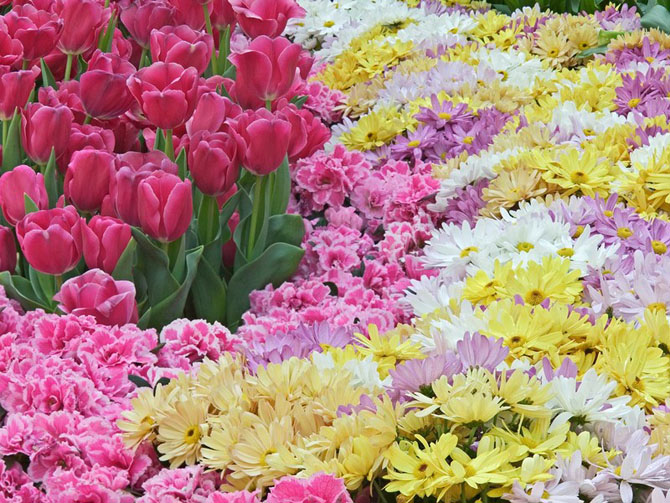 flowers1_202